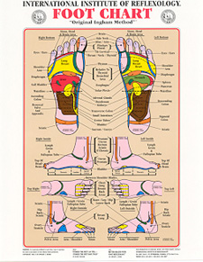Reflex points of the Foot